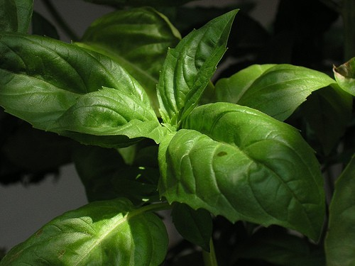 Nine must have spices and herbs - basil is #1