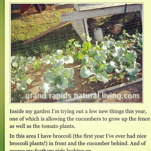 My garden just one week ago! http://grandrapidsnaturalliving.com/see-how-her-garden-grows/ I'm already amazed at how much it's grown since then! #SHmgardener