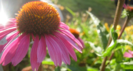 hormone treatments and endometriosis