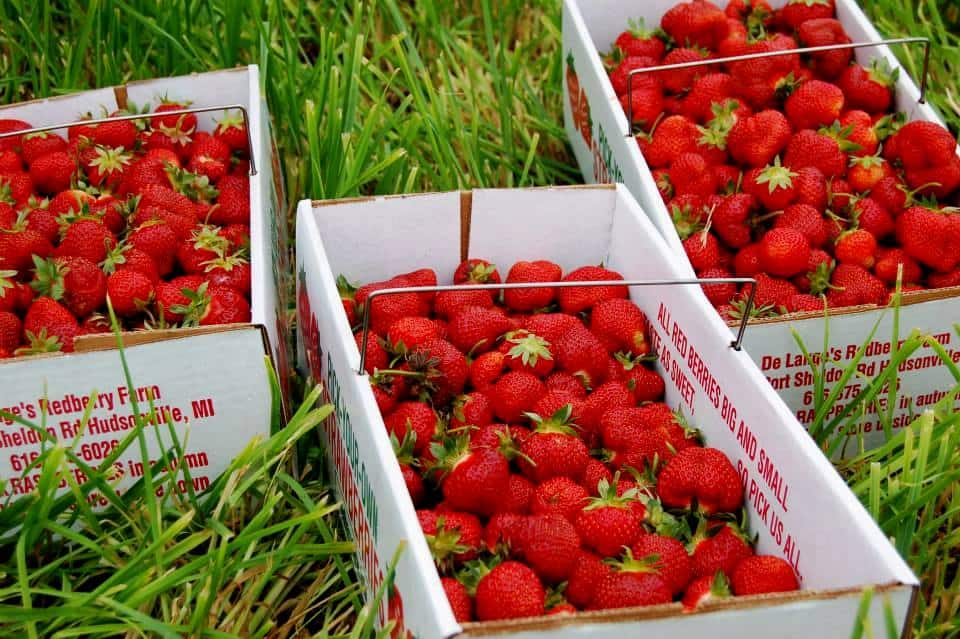 Summer Berry Harvest : How to use local U-Picks to your advantage!