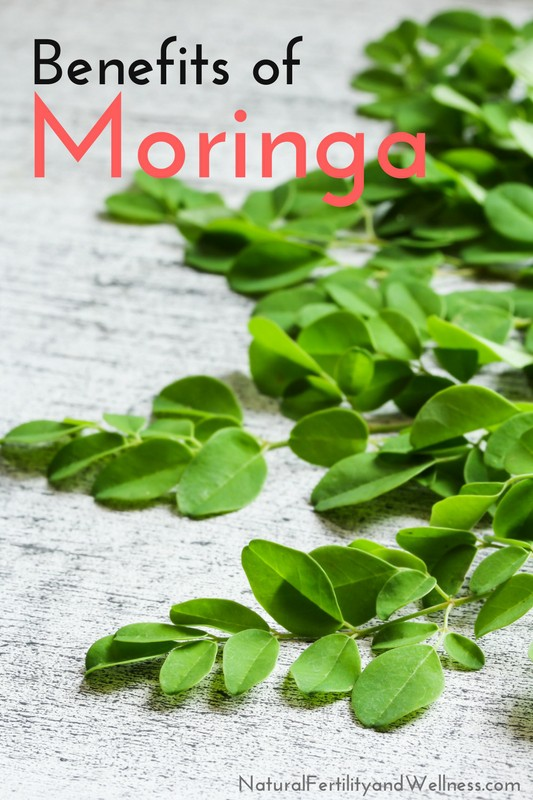 Benefits of Moringa – an antioxidant and very nutritious herb