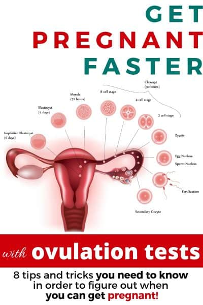 ovulation testing image of ovaries