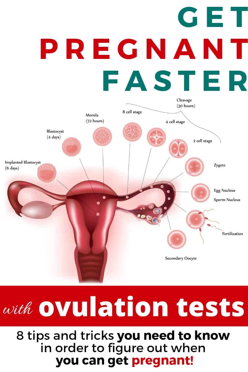 Ovulation testing: tips for finding your LH surge and predicting